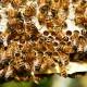 Un rucher école dans le cadre du projet d'agriculture péri-urbaine en PACA